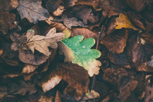 leaves-1149004_960_720