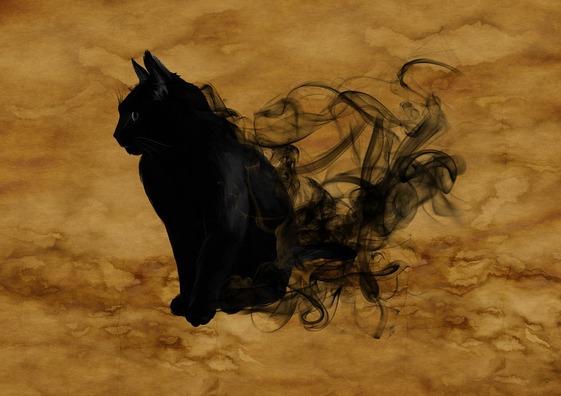 cat-1002850_960_720