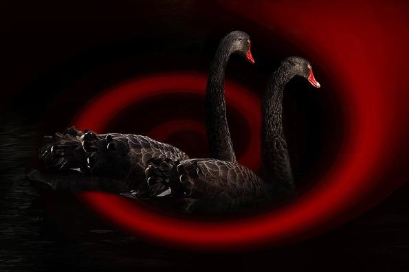 swan-468091_960_720