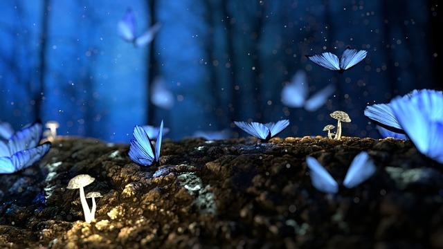 butterfly-2049567_960_720
