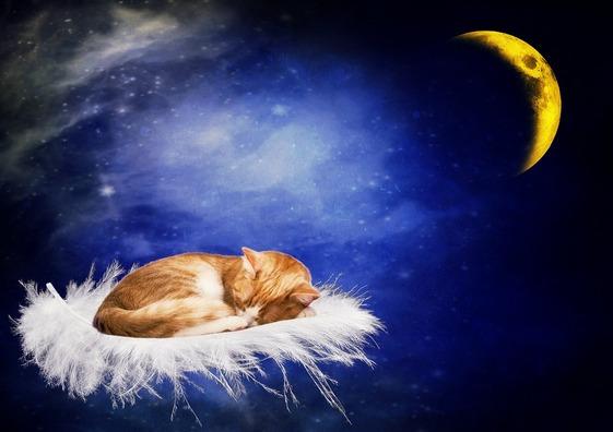 cat-2124168_960_720