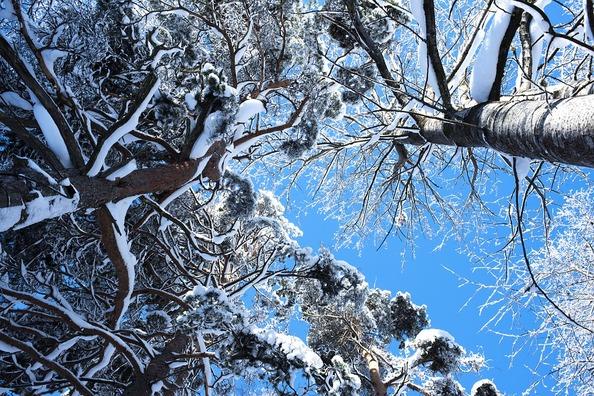 trees-4004238_960_720