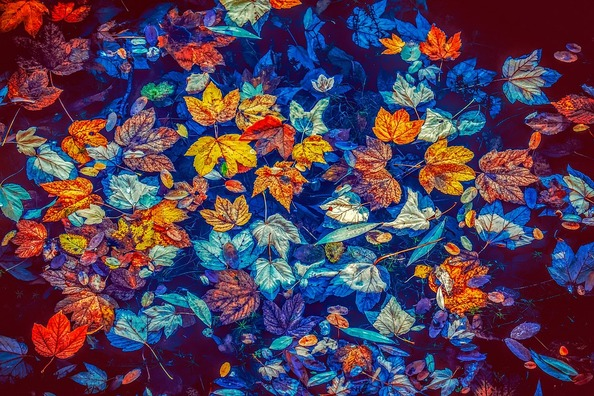 fall-leaves-3744649_960_720