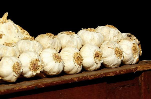garlic-249228_960_720