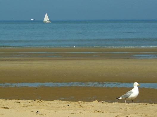 beach-265891_960_720