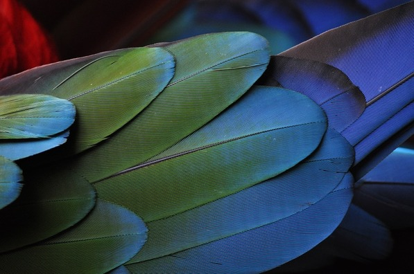 feather-731450_960_720