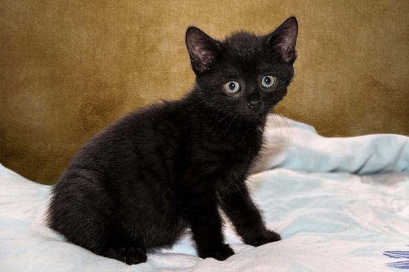 cat-4546535_960_720