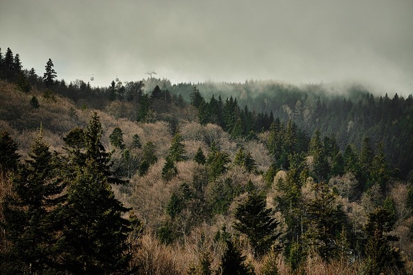 forest-1246572_960_720
