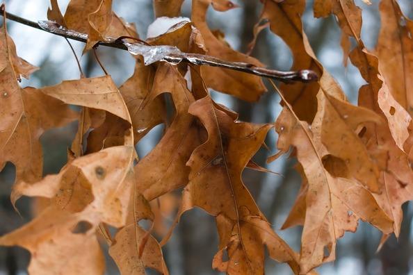 leaves-4073522_960_720