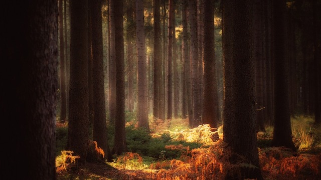 forest-1764068_960_720