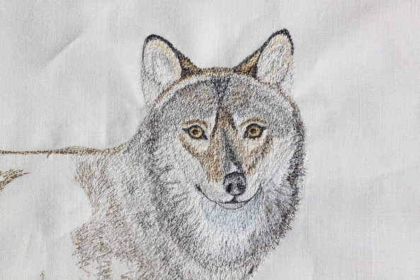 wolf-467596_960_720