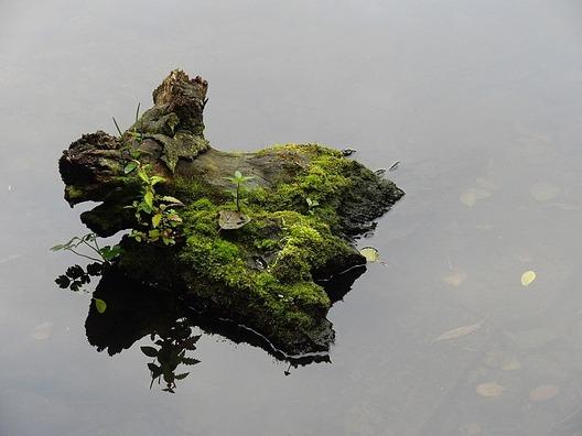 tree-stump-2076267_960_720