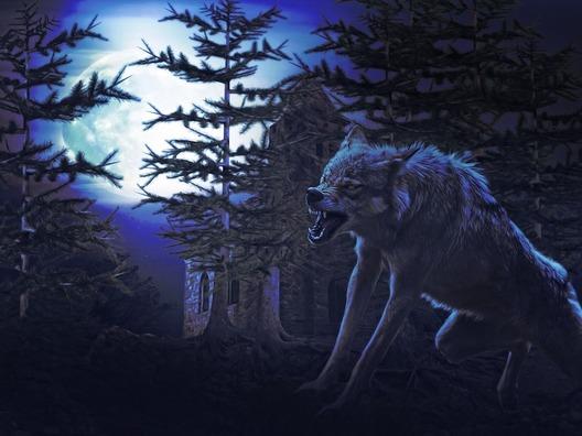 wolf-4146351_960_720