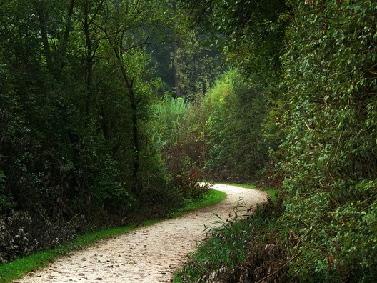 forest-path-1705359_960_720