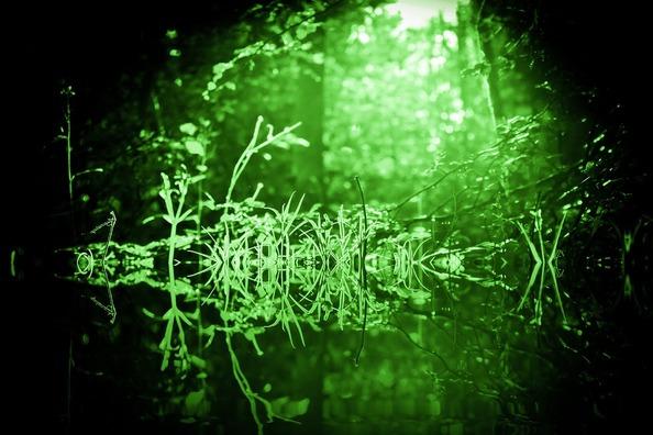 green-3916094_960_720