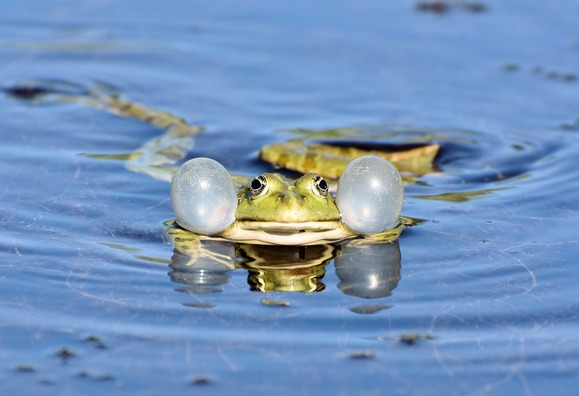 frog-3678832_960_720