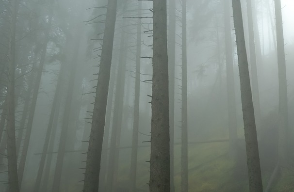 forest-655980_960_720