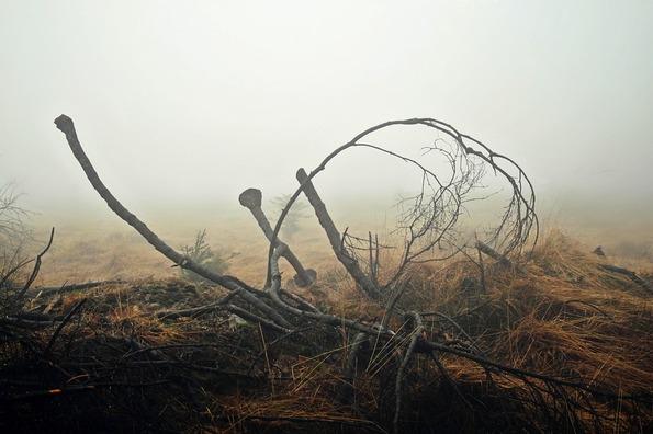 fog-1723145_960_720