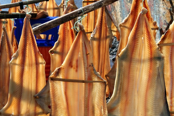 fish-249155_960_720