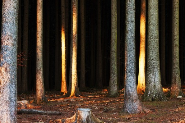 forest-3866010_960_720