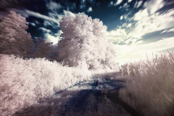 infrared-407191_960_720