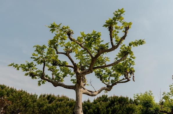 isolated-tree-3544689_960_720