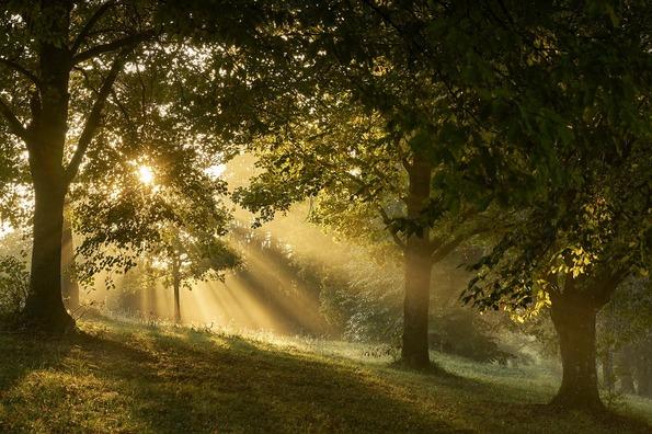 fog-3776796_960_720