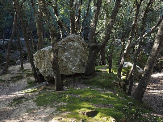 oak-forest-1117724_960_720