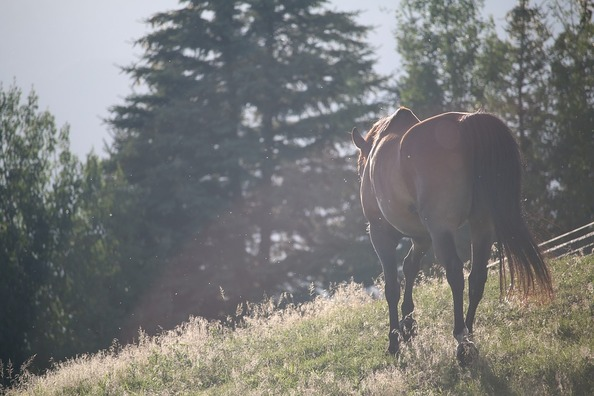horses-1150017_960_720