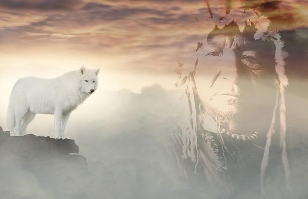 wolf-3484819_960_720