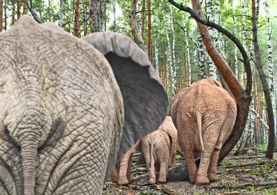 elephant-2910296_960_720