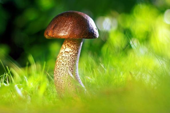 mushroom-3587888_960_720
