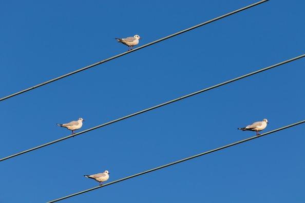 birds-on-wire-4621974_960_720
