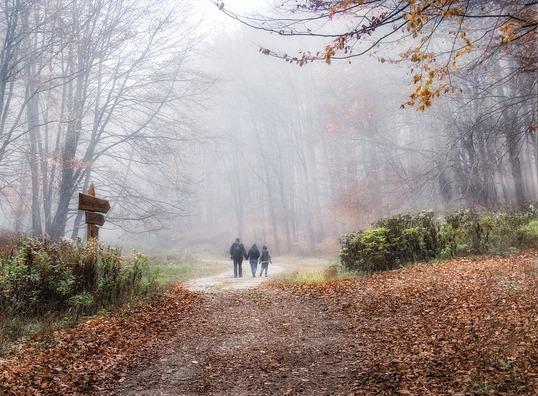 fog-3796774_960_720
