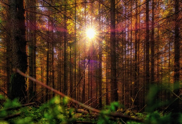forest-3762728_960_720