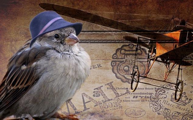 sparrow-2786776_960_720
