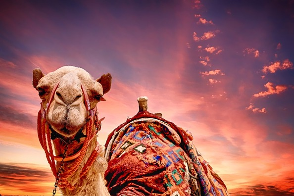 camel-2500618_960_720