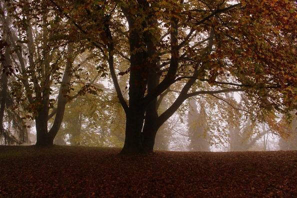 tree-1771507_960_720