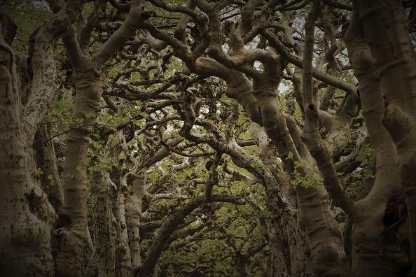 tree-branch-4183861_960_720