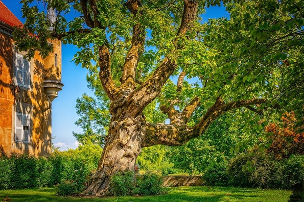 tree-3597671_960_720