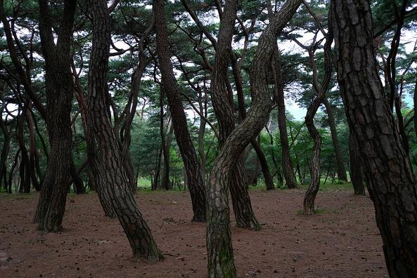 wood-3312209_960_720