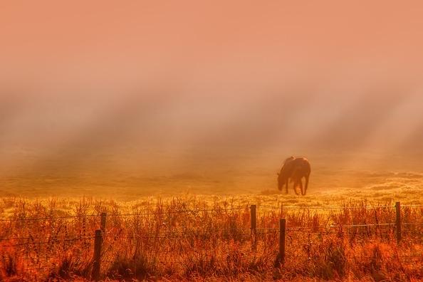 sunrise-3377564_960_720