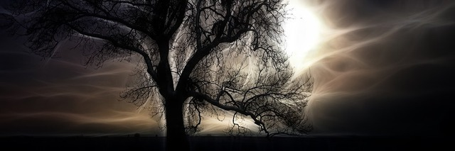tree-1308055__340