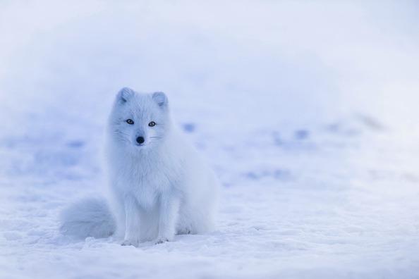 iceland-1979445_960_720