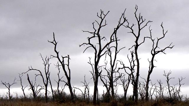 trees-3647755_960_720