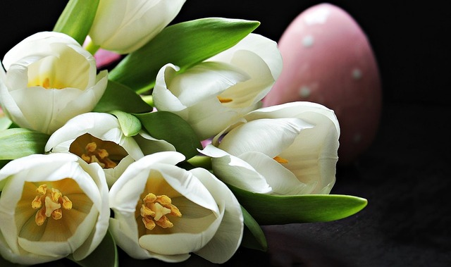 tulips-2091615_960_720