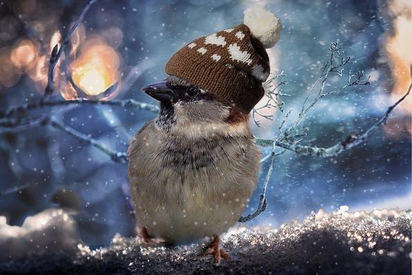 sparrow-2909335_960_720