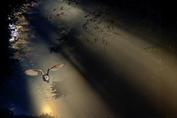 owl-1673568_960_720