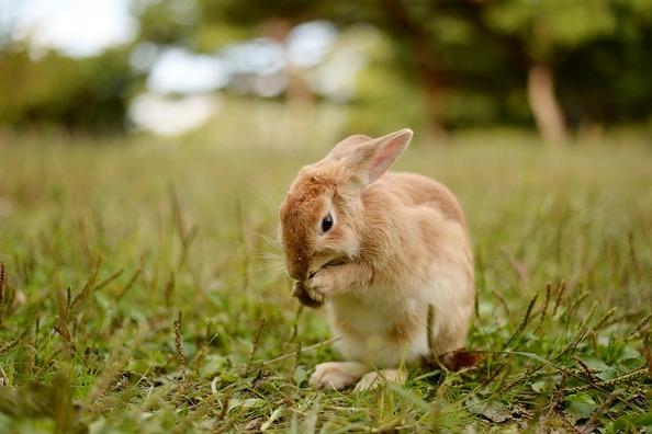 rabbit-3851547_960_720