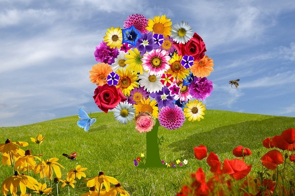 flowers-2768412_960_720
